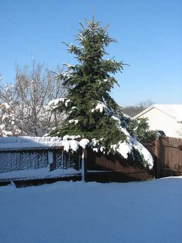 Snow Storm 11-29-11 8