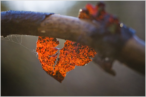 20111110. Bark of alder. 0100. by Tiina Gill