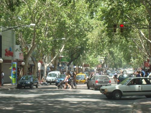 Arboles en Mendoza, Argentina by Grupo THM, tecnologías horticultura mediterránea