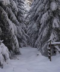 Vinter i nærområdet.