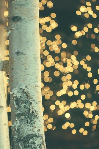 christmas xmas winter light usa cold macro tree boston closeup canon dark ma lights hotel evening dof bokeh alienskin stupm morningdewphotography t1i ef100l