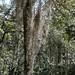 Árboles llenos de plantas epífitas - Trees filled with epiphytic plants; camino entre San Sebastián Yutanino y San Francisco Cahuacuá (Región Mixteca), Oaxaca, Mexico por Lon&Queta