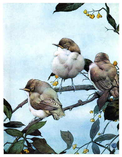 038-La curruca del sauce-The book of baby birds 1912- Ilustrado por Edward Detmold- Hatchi Trust Digital library