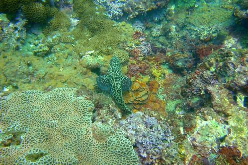 野柳地質保護區保育有成,可見石斑悠遊於珊瑚間,陳玄州攝