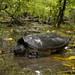 09-29-11: Tortoise