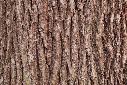 993/1000 - Bark by Mark Carline