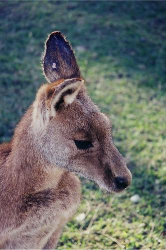 kids and animals in Australia