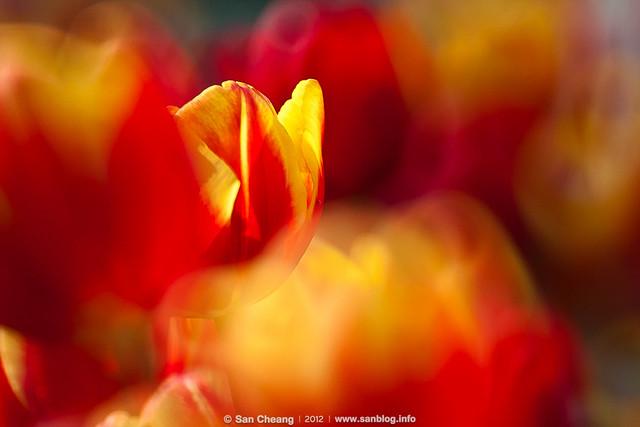 flora-1456