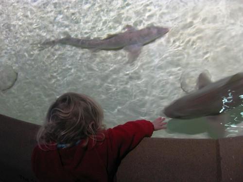 shark touch tank