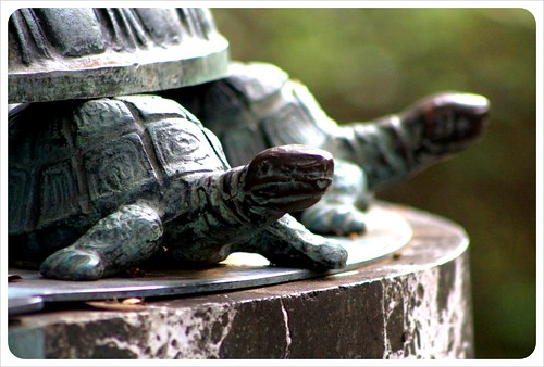 savannah turtles