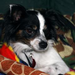 Dog Gone Natural Ashburn Virginia