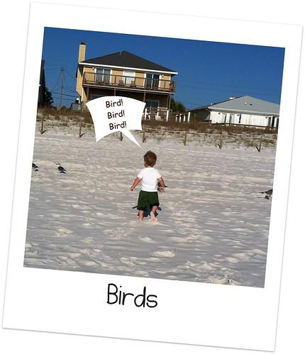 BIRDS Camera Roll-1398