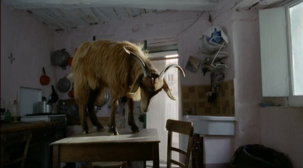 le quattro volte, frammartino, sheep, table, roy andersson, goat