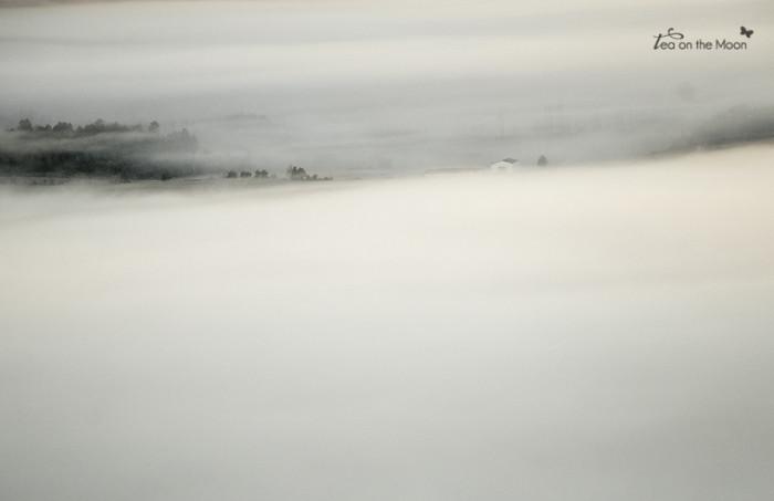 año nuevo niebla1