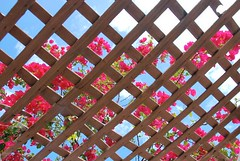 lattice-with-flowers