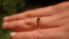Erins Ring