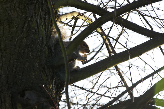 squirrel mid-nibble