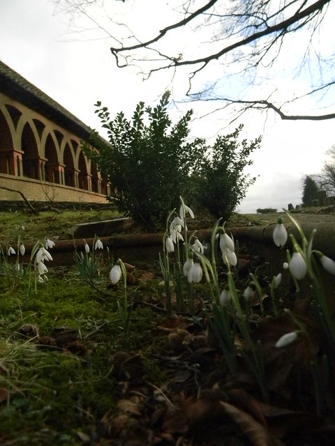 Snowdrops - Watts chapel