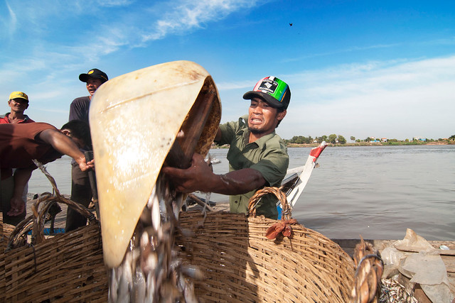 A man transferring fish into big basket