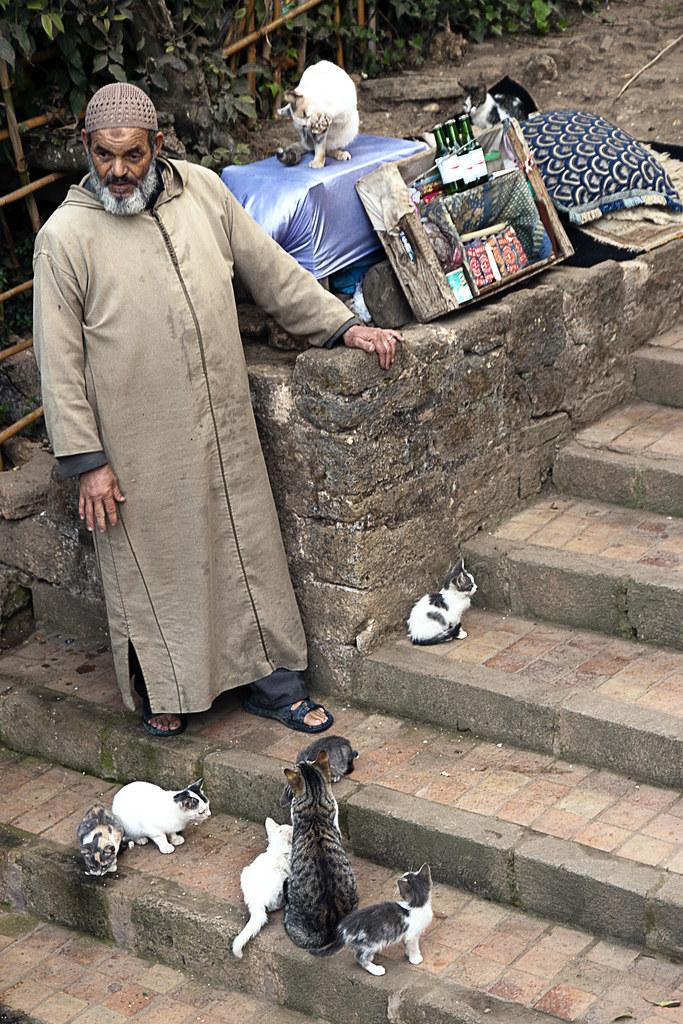 Maroko koty