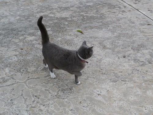 friendly neighborhood cat