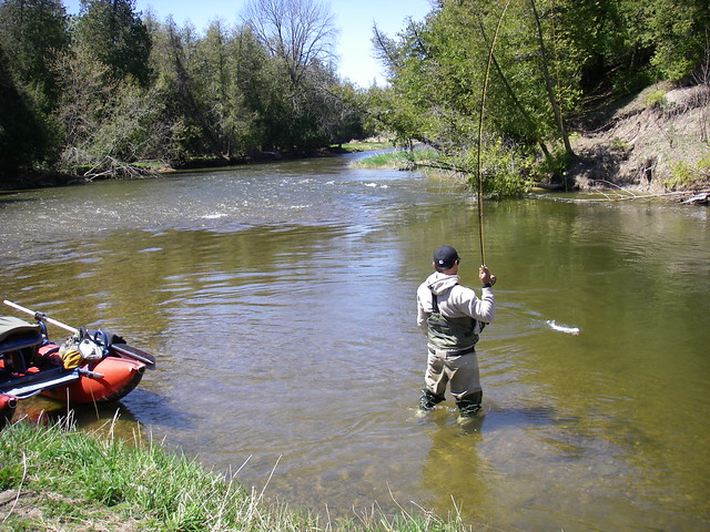 Fighting a steelhead on the Beaver River