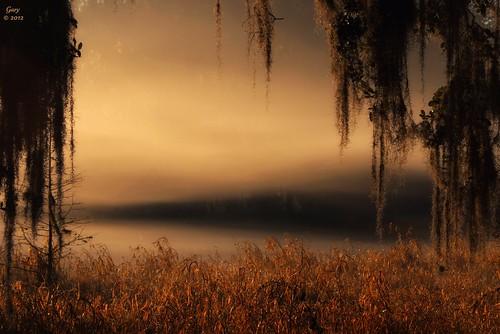 fog sunrise moss