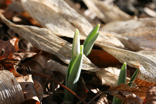 winter sprouts 015