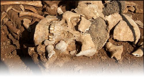 imagen-entrada arqueologia