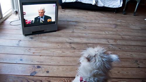 Dog watching press conference Elfstedentocht.
