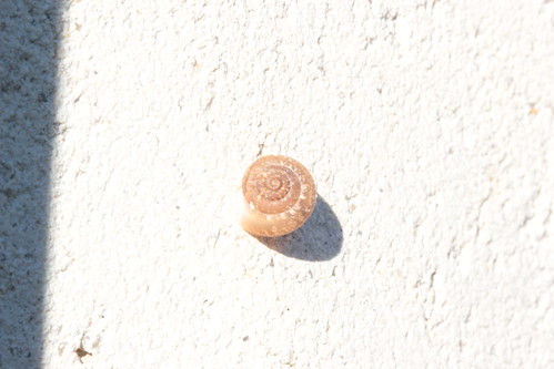 snail in the sunshine