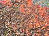 anche i rami sono belli, non solo le foglie