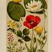Hoffmann-Dennert botanischer Bilderatlas