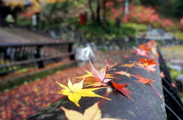 紅葉の秋 清水寺の紅葉 富加町にて