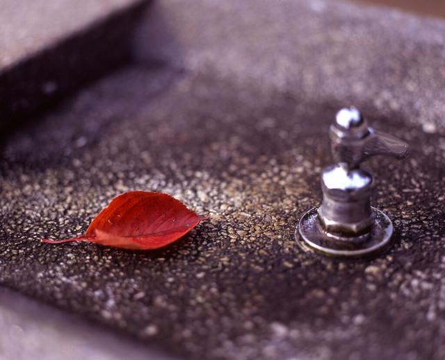 真っ赤な落ち葉