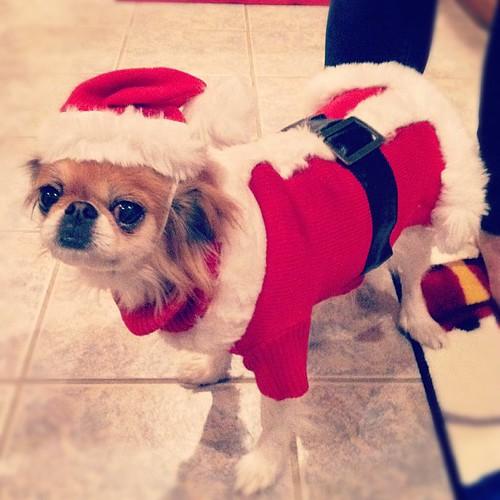 Keiko says Merry Christmas!!!