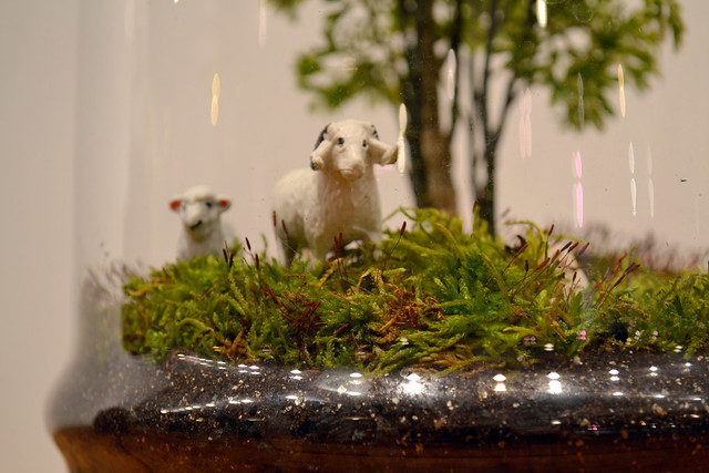 Detail of a terrarium created by Jennifer Williams, on exhibit at Brooklyn Botanic Garden. Photo by Elizabeth Peters.