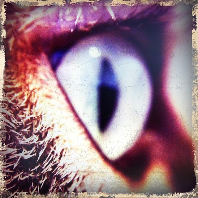 Onion's eye 1