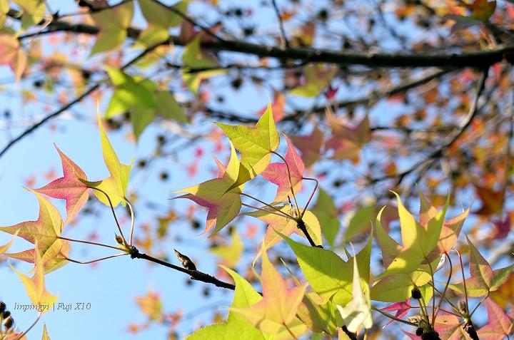 Fuji color