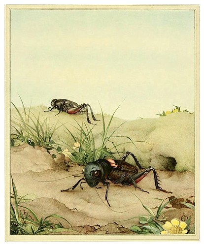 032-El grillo de campo- Fabre's book of insects ..1921-Ilustrado por Edward Detmold