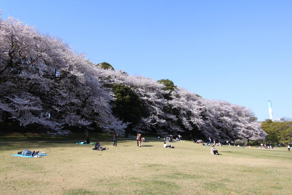 Sakura Photo 2011Kinuta Park (13)