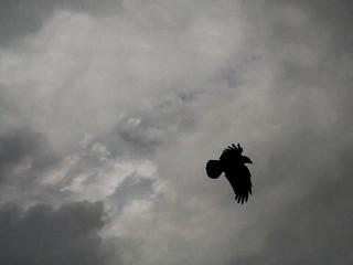 black bird | winter solstice