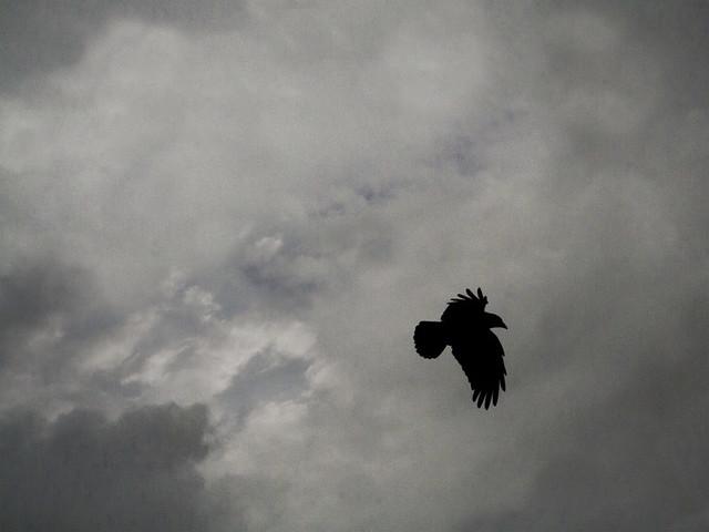 Blackbird Fly Away Blackbird Fly