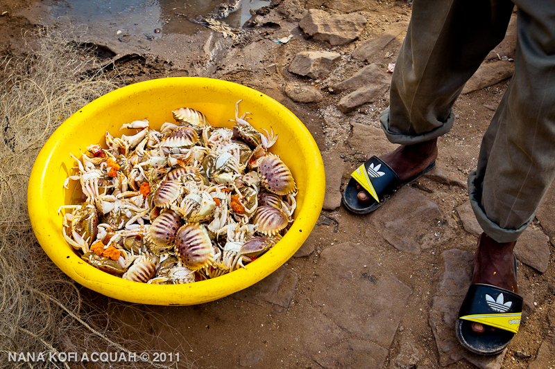 Elmina - freshly caught crabs