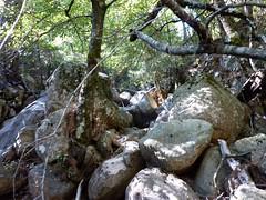 Confluence Velacu/ruisseau de Paliri  : branche du Velacu sur la G