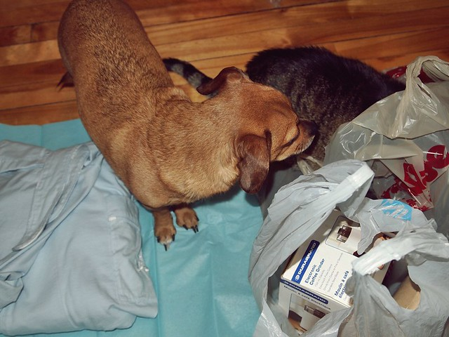 "the Dog & Cat ""helping"" with Christmas wrapping!"