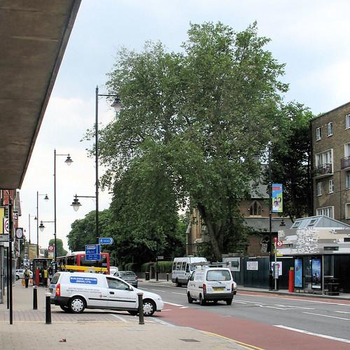 Trees - High Road Tottenham