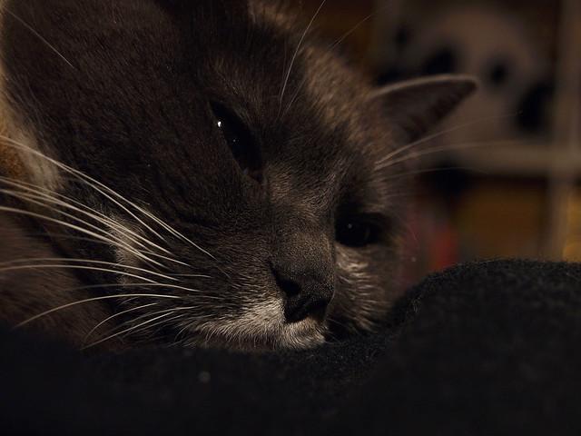 Sleepless Cat