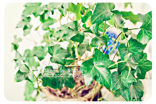 365-362_ALN_8714 by amaranthris