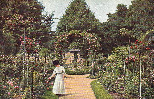 Rosengarten by Anna Amnell